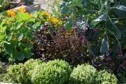 Декоративный огород: красивый и практичный