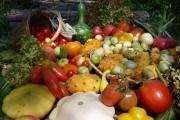 Гармония пользы и красоты: совместные посадки тыквенных и бобовых культур