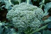 Восхитительная брокколи —