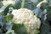 Выращиваем цветную капусту