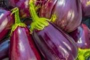 """Выращиваем баклажаны – """"новенькие"""" и """"старенькие"""""""