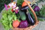 Что сеять будем: традиционный овощной набор