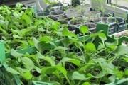 Огород в новом сезоне: от посева до урожая