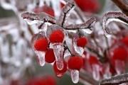 Декабрьские декады: садовые работы в первый месяц зимы