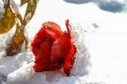 Цветоводы в декабре: день за днем