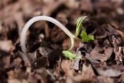 Озимые, подзимние и зимние посевы