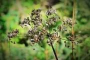 Домашнее семеноводство: все под контролем