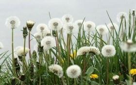 От вредителей защитят травы