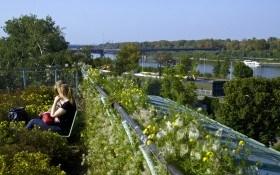 Висячий сад на крыше библиотеки: Варшава