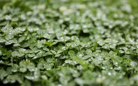 Огород в гармонии с природой: восстанавливаем почву сидератами