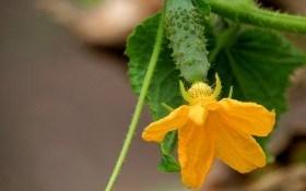 Подбор сортов для посадки: рекомендации овощеводов