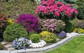 Основы гармонии: значение цветов и их сочетание в цветнике