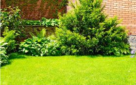 Уход за газоном весной. 6 простых правил