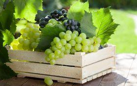 Как сохранить виноград до весны?