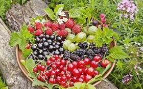 Урожайный ягодник: лучшие сорта для приусадебного участка. Обзор