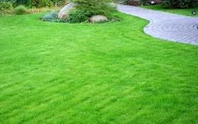 Виды газонной травы: какую газонную траву лучше посадить на даче