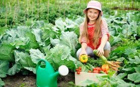 Огородный дебют: полезные советы начинающим овощеводам