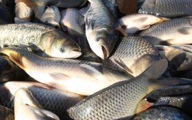 Почему нам следует обязательно добавить в свой рацион рыбу