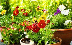 Цветы, рожденные зимой. Все о посеве на рассаду