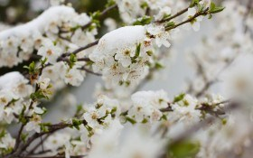 Растения пострадали от заморозков: что делать?