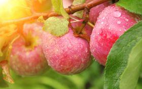 Яблони без изъянов. Обзор лучших сортов яблонь для Украины