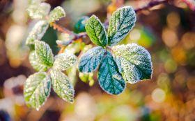 Осенние заморозки: как защитить сад от капризов погоды