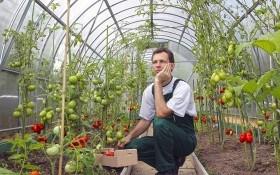 Трипсы в теплице: как спасать растения?