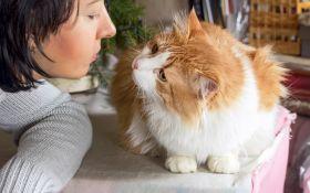 Если бы кошка могла говорить…