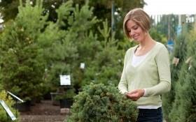 6 секретов успеха: покупаем и выращиваем хвойные