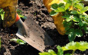 Вырастить землянику из семечка: возможно, но сложно