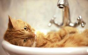 Чистая кошка — счастливая кошка