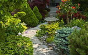 Игольчатый ковер. Как выращивать почвопокровные многолетники в саду?