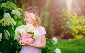 Пышные «метелки»: выращивание и размножение гортензии метельчатой