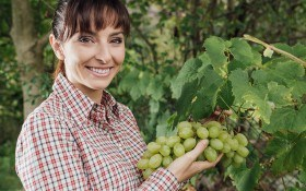 Молодые лозы спрячем от мороза: 3 вида укрытия винограда
