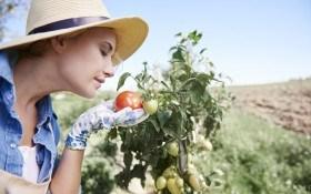 Подкормка растений природными средствами