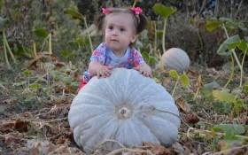 Уроки тыквоведения: выращивание тыквы