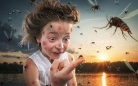 Не допустить к телу: дачников атакуют опасные насекомые