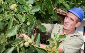 Почвенный вопрос или где не растет южный красавец грецкий орех