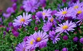 Цветоводы в октябре: день за днем