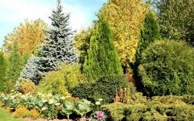 Пестрые «иголки»: сорта и правила ухода за хвойными растениями