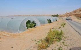 Огород в пустыне: Израиль