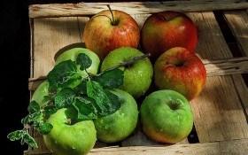 Хранение яблок: опыт польских садоводов