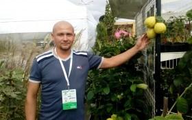 Выращиваем лимоны и бананы дома
