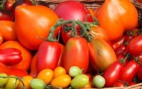 Дачникам на заметку: как выбрать качественные семена?
