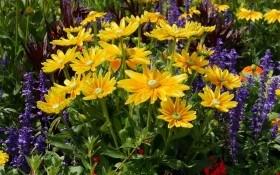 Заветное семечко: как собирать и хранить семена летников