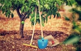 Применение удобрений в плодовых насаждениях