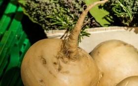 Репа: выращивание сказочного овоща