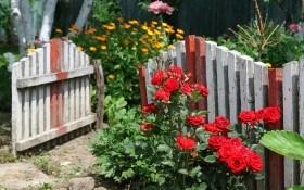 Теплая одежка для роз: как подготовить розы к зиме