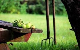 Что нужно сделать в саду в июле