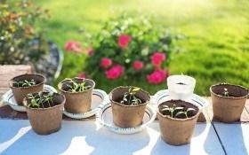 Колыбель для ростка: торфяной горшочек